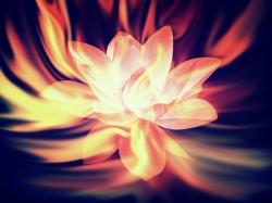firework-lotus